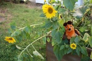 Maus in Sonnenblumen